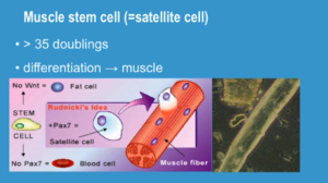 stem cell growth factors 1
